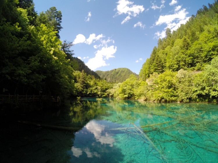 Panda Lake in Jiuzhaigou National Park